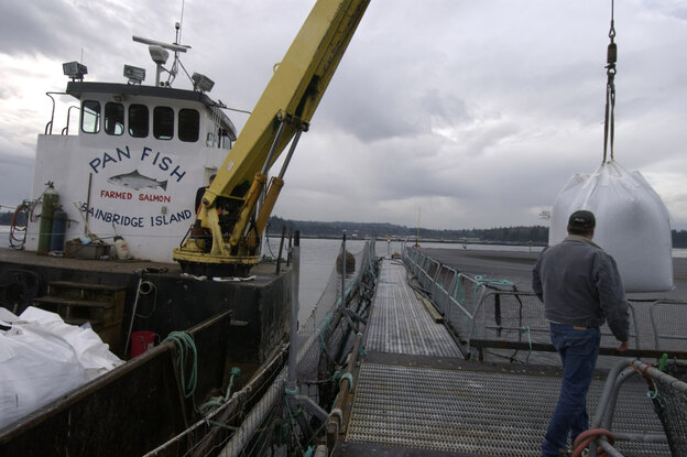 Employees at Pan Fish USA, a salmon fish farm, unload fish feed on Bainbridge Island, Wash.