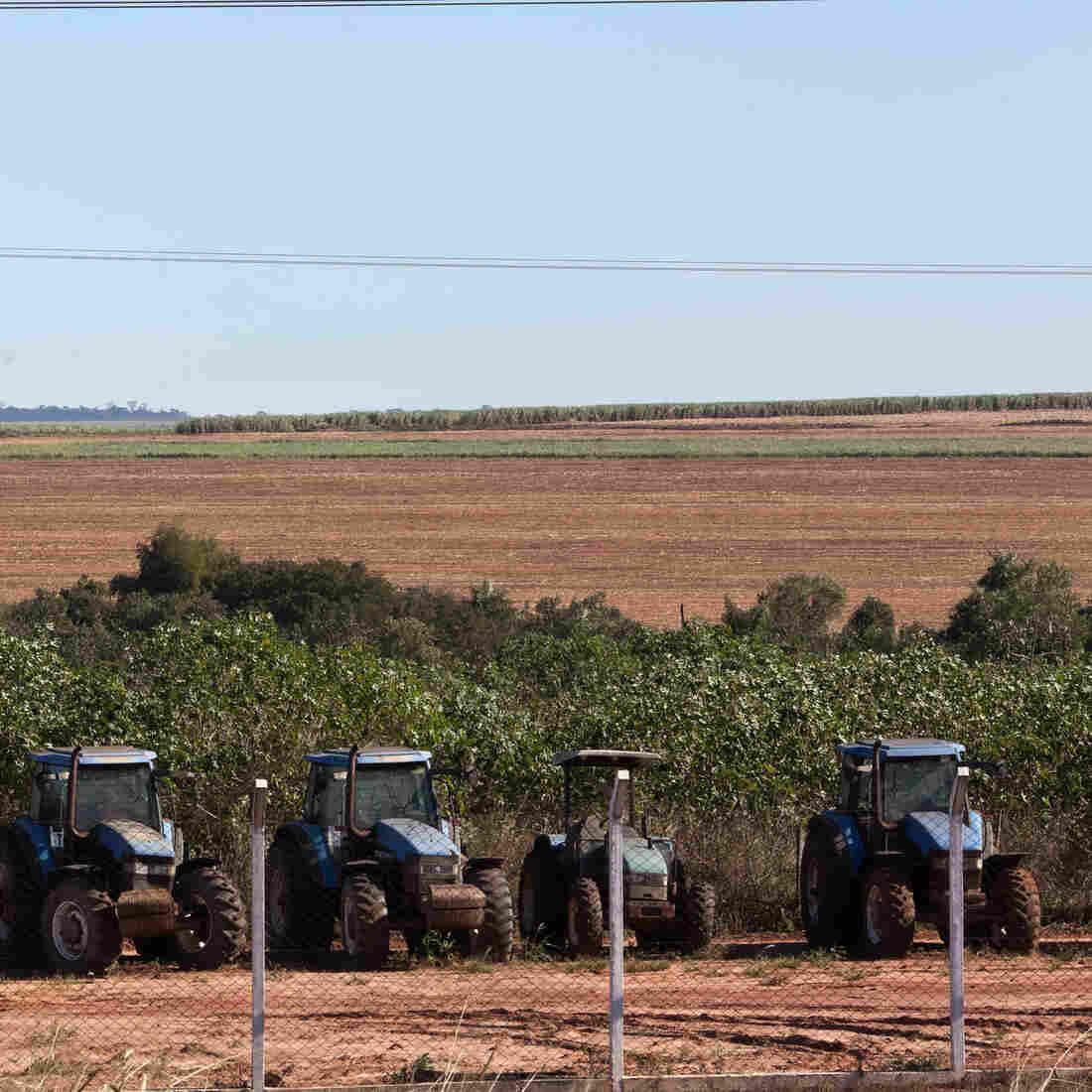 Pepsi Pressured To Fight Big Sugar's 'Land Grab'