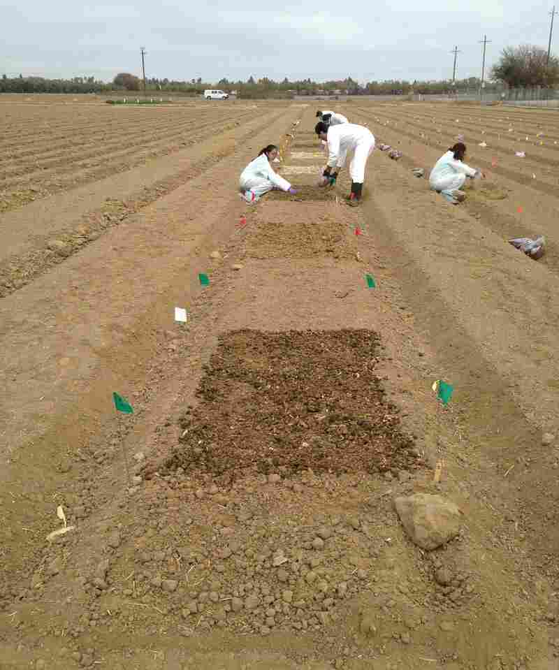 The scientists spread four kinds of raw manure on a field in Salinas, Calif., as part of an experiment to test how long strains of E. coli live in soil where leafy greens are grown.