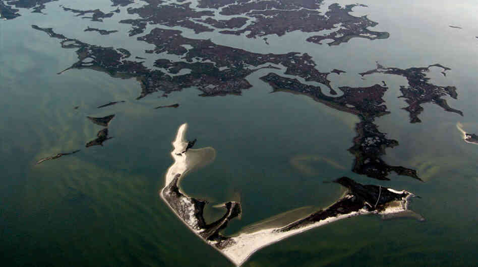Saltwater wetlands that include marshes and shoals on Virginia's Atlantic coast. U.S. coastal wetlands losses were 25 percent greater from 2004-2009, according to a recent fe