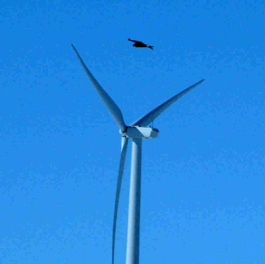 Duke Energy Pleads Guilty Over Eagle Deaths At Wind Farms