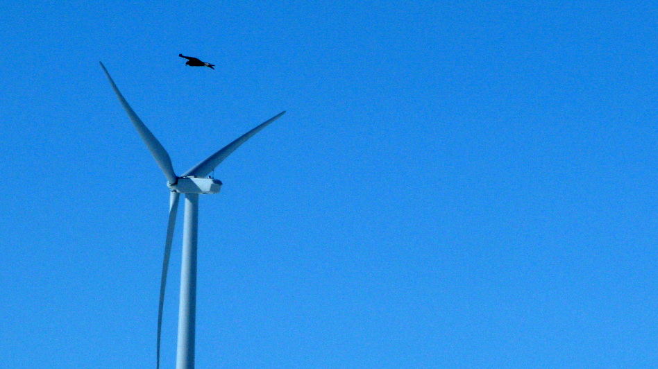 A golden eagle is seen flying over a wind turbine on Duke Energy's Top of the World wind farm in Converse County, Wyo.