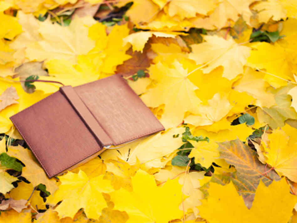opened book lying in yellow leaves