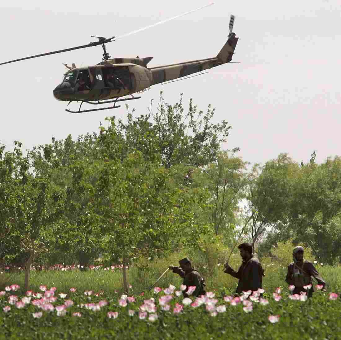 A helicopter from the American security contractor DynCorp provides air support as members of an Afghan eradication force plow opium poppies on April 3, 2006, in the Helmand province, Afghanistan.