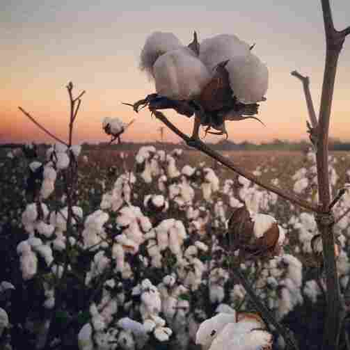 How Technology And Hefty Subsidies Make U.S. Cotton King