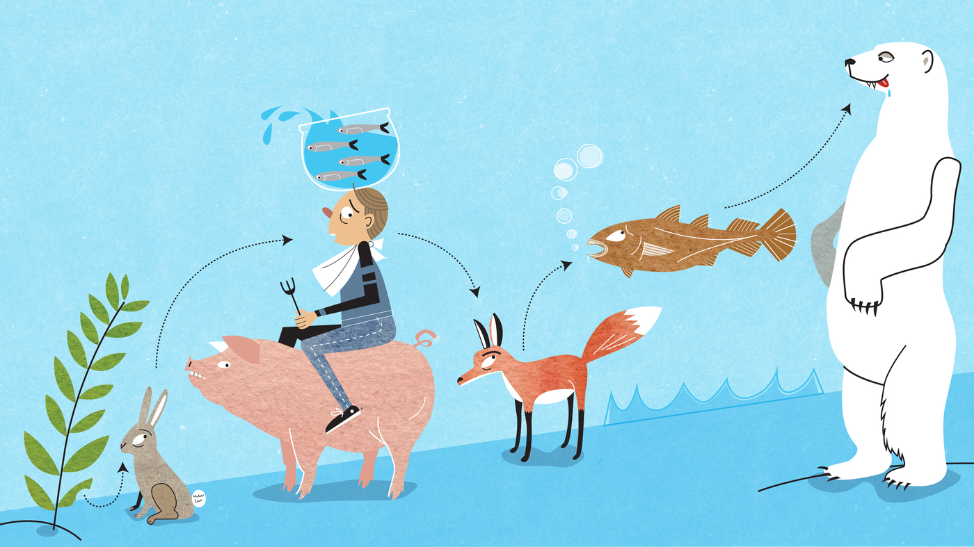 Between Pigs And Anchovies: Where Humans Rank On The Food Chain