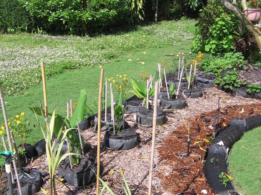 In Florida A Turf War Blooms Over FrontYard Vegetable Gardening – When Do You Plant a Vegetable Garden