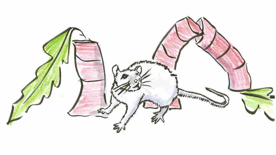 Rat next to fallen trees