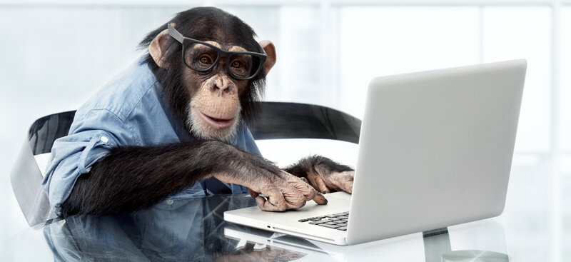 Image result for monkey typing