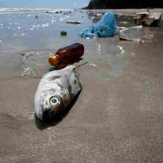 How Plastic In The Ocean Is Contaminating Your Seafood