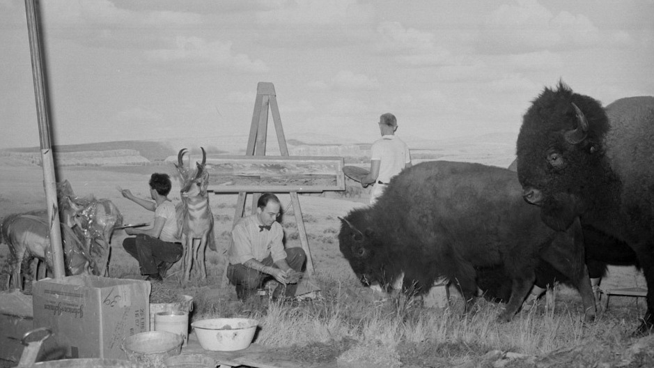 Fred F. Scherer, left, and James Perry Wilson, center, paint the background for the American Bison/Pronghorn antelope diorama in 1942.