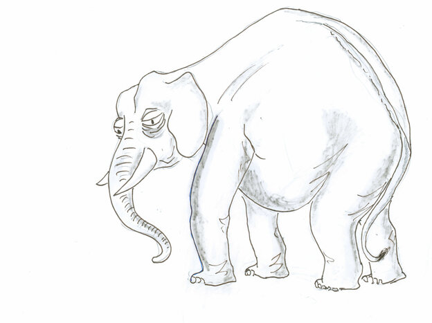 Elderly elephant