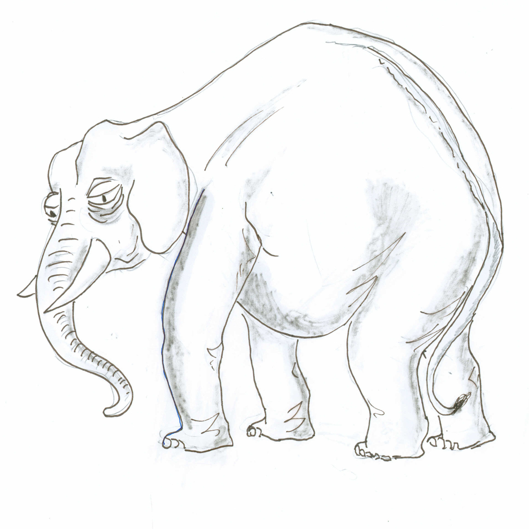 Elderly elephant