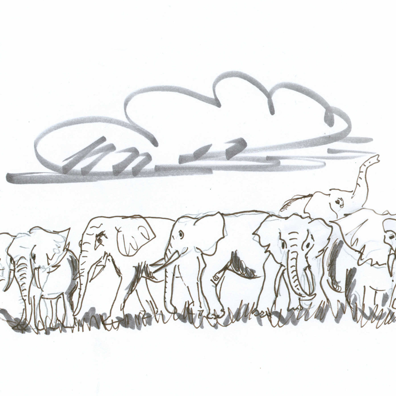 Elephant herd frolics under a cloud