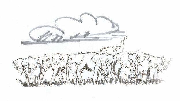 Elephant herd frolics under a cloud