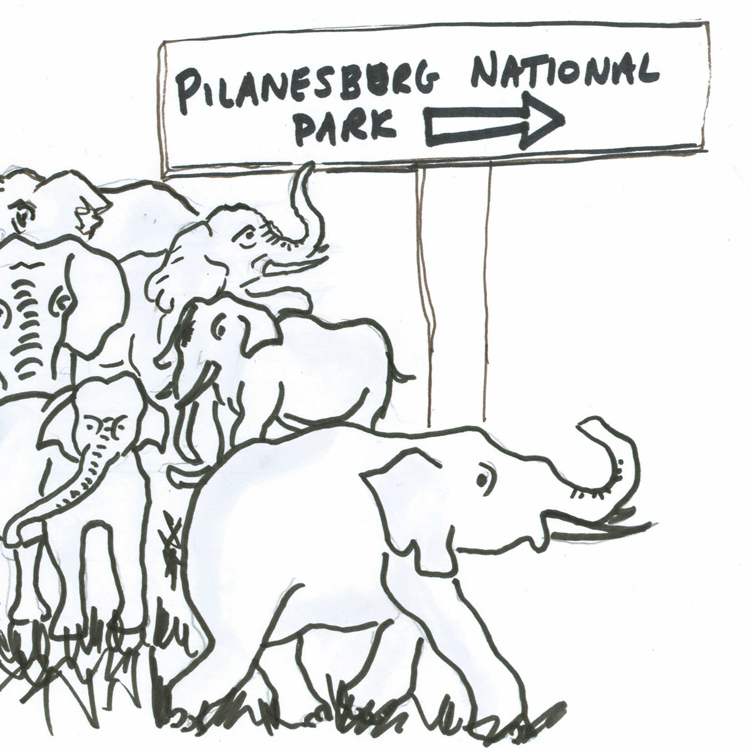 Rambunctious elephant herd follows the sign to the National Park.