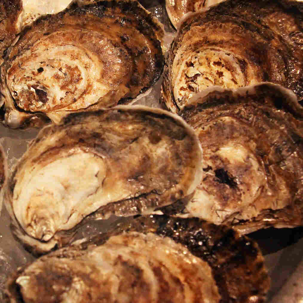 They're Back! Chesapeake Oysters Return To Menus After Rebound
