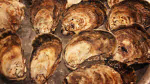 A plate of Sweet Jesus oysters grown in Chesapeake Bay by Hollywood Oyster Co. in Hollywood, Md.