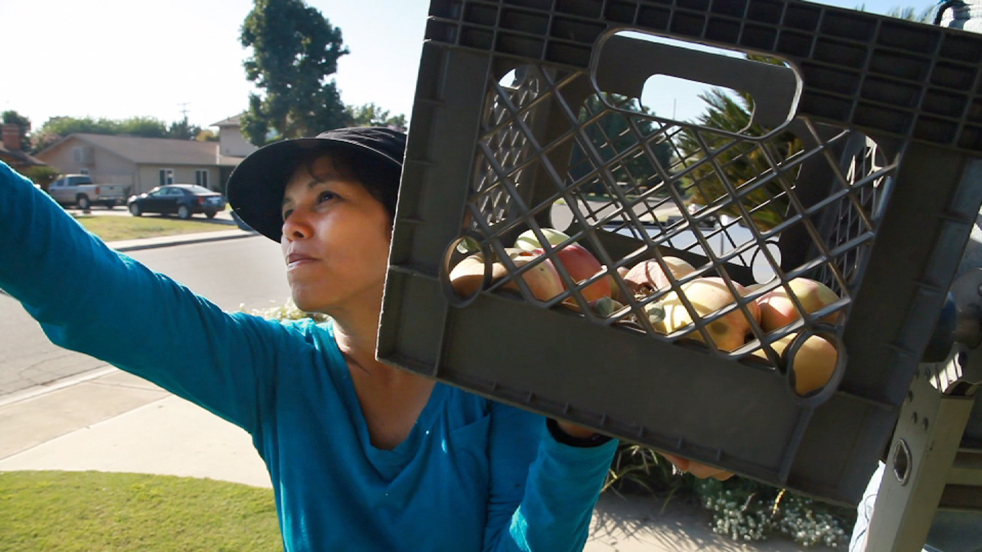 This Stanford Ph.D. Became A Fruit Picker To Feed California's Hungry