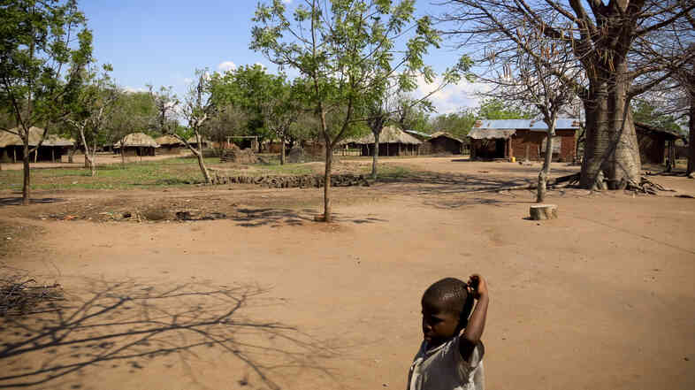 Villages in the Lower Shire valley of Malawi, like this one named Jasi, rely heavily on subsistence farming and steady rainfall, and are struggling to produce steady harvests.