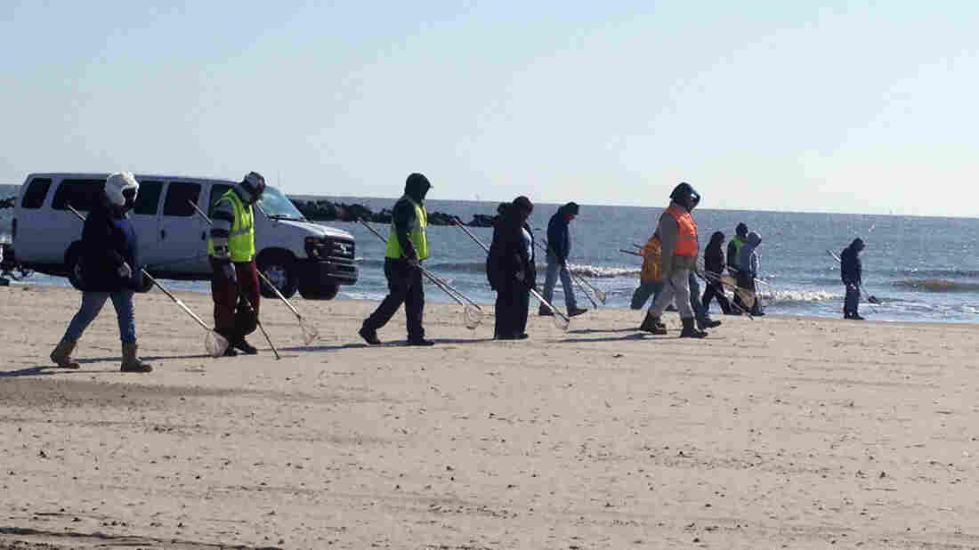 A cleanup crew combs the sand for tar balls on Grand Isle, La. The 2010 Gulf Coast oil spill may seem like a distant memory, but the recovery is still underway.
