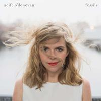 Aoife O'Donovan, Fossils.