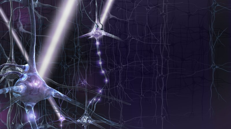 If Genes Dont Turn Off Brains Wiring >> Experimental Tool Uses Light To Tweak The Living Brain Shots
