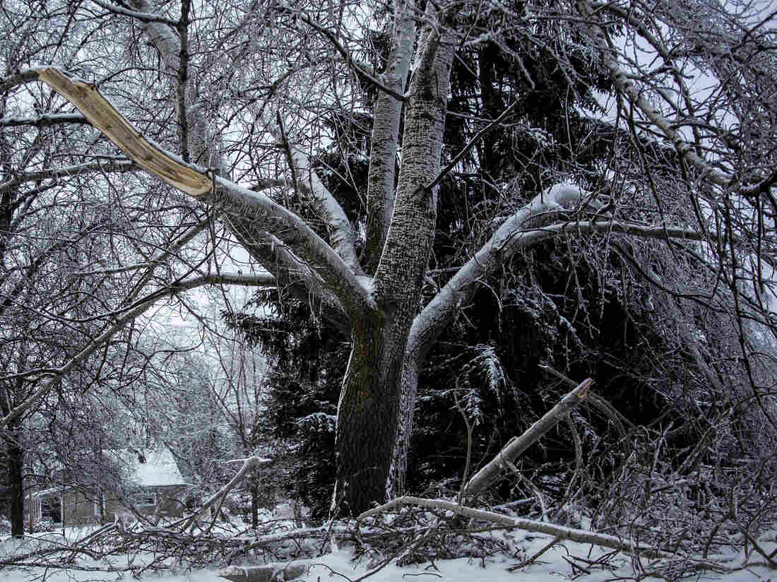 In Delton, Mich., broken branches and snapped limbs lie on the ground after this week's snow and ice storms. Many in the state are without power.
