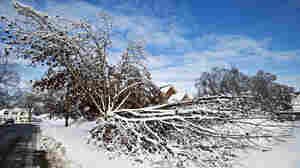A tree is split in half under the weight of ice and snow in Middleville, Mich. Nearly 29,000 people are still without power in Michigan — but that's down from 200,000 just days ago.
