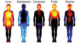 People drew maps of body locations where they feel basic emotions (top row) and more complex ones (bottom row). Hot colors show regions that people say are stimulated during the emotion. Cool colors indicate deactivated areas.
