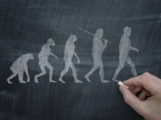 A drawing of the scientific theory of evolution, which states that living things evolve over time.
