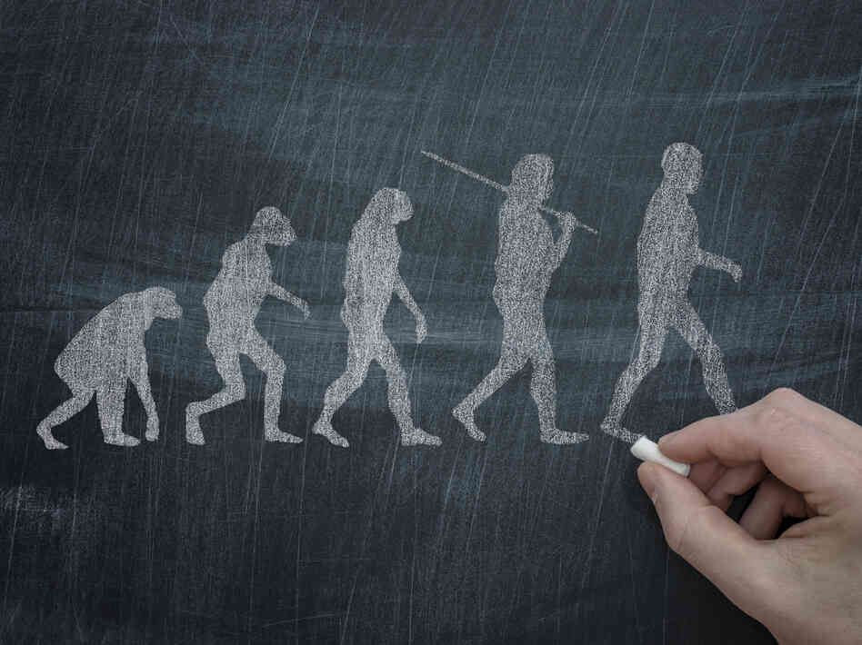 A drawing of the scientific theory of evolution, which states that living things evolve o