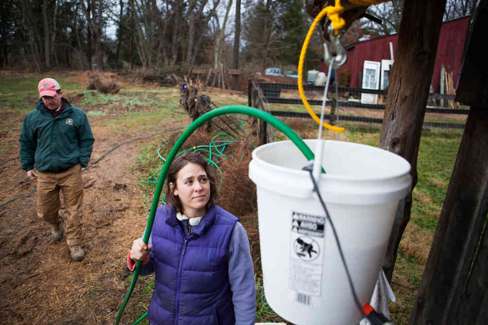 Sara Guerre fills the chicken coop's water feeder. The Guerres installed an aquarium heater to prevent freezi