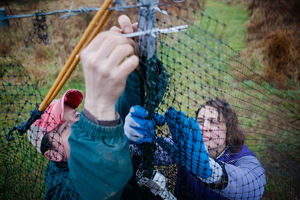 Chris and Sara work together to repair a section of fence that protects the crops from deer.