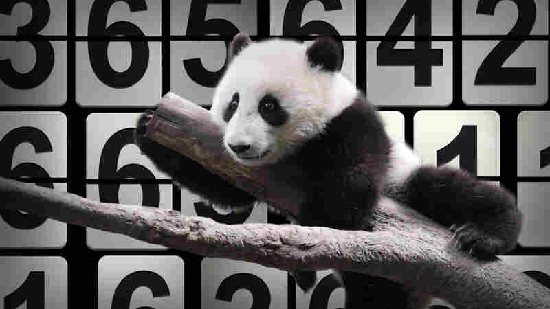 From Pandas To Health Care: The 13 Numbers Of 2013