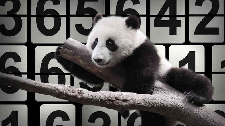 42 panda cubs were born (and survived) in zoos this year — and that's just one of NPR's numbers of the year.
