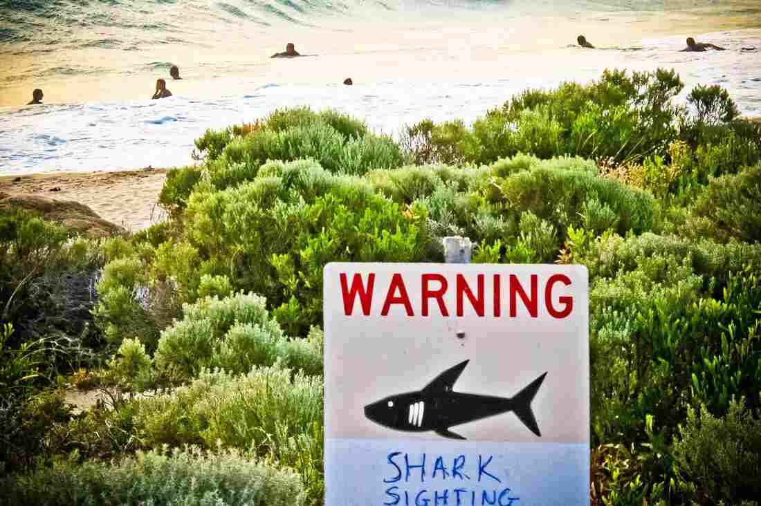 A shark warning is displayed near Gracetown, Western Australia, in November. An Australian man was killed by a shark near the area that mon