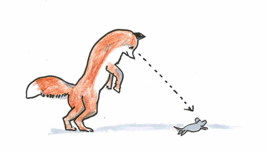 A fox and a mouse.