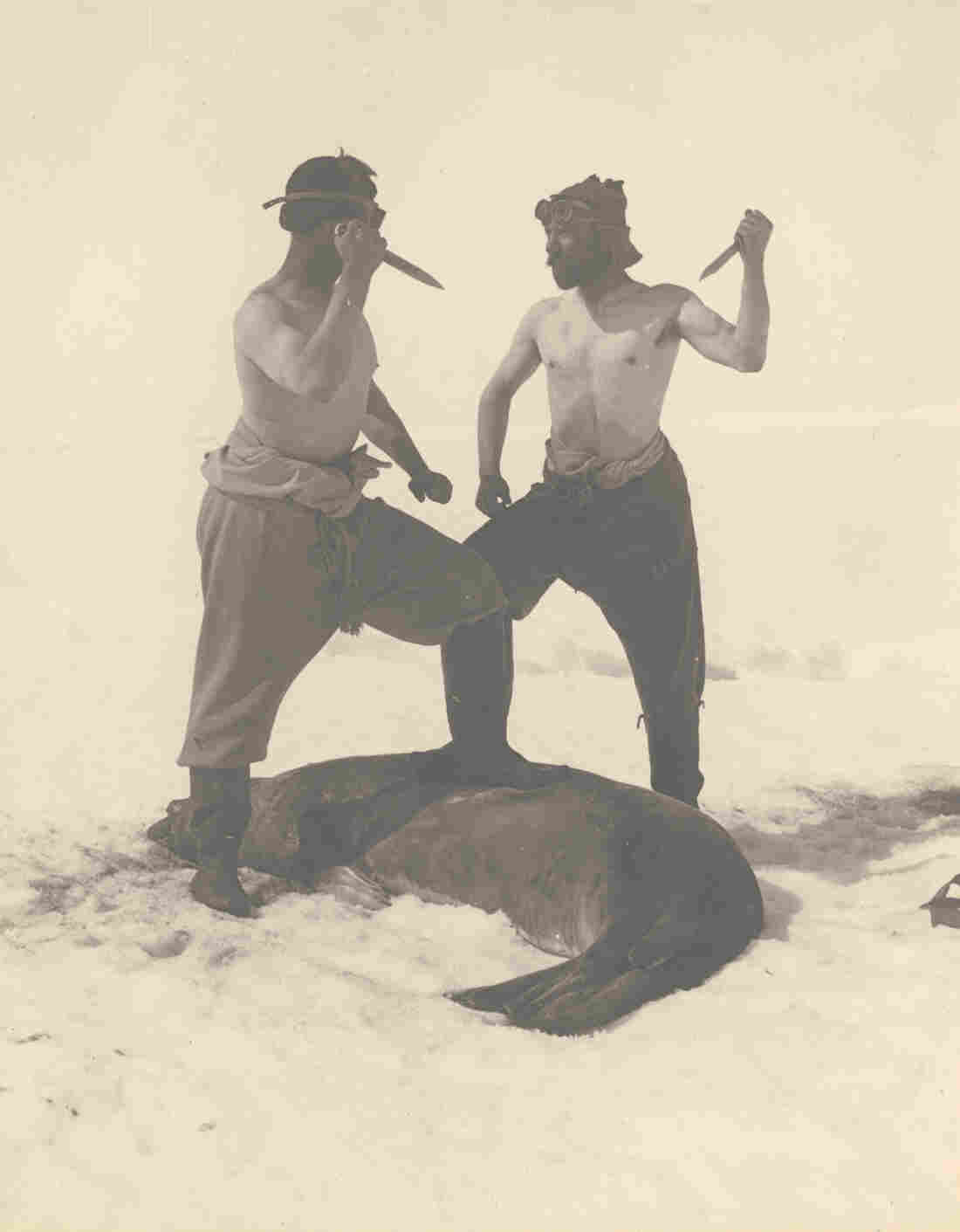 Frank Wild — Ernest Shackleton's second-in-command on the Endurance voyage — and M.H. Moyes slay a Weddell seal.