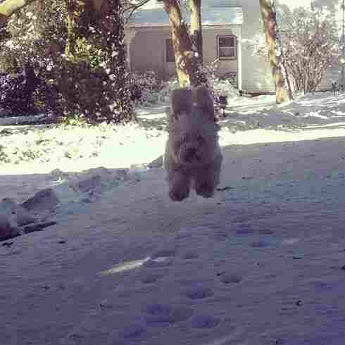 Flying snow pup
