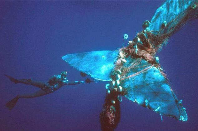 Whales, Dolphins Are Collateral Damage In Our Taste For Seafood