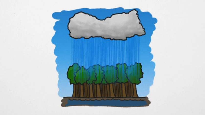 A Rain Forest Begins With Rain, Right? Is This A Trick Question?