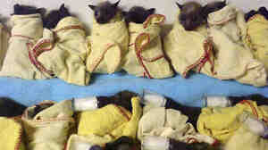 At the Australian Bat Clinic in Queensland, 15 baby flying foxes (bats) were lined up and ready to be fed Thursday. They were brought there to get out of the extreme heat, which has killed hundreds of thousands of bats.