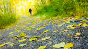 Yellow leaves color a path as a person walks into the distance.