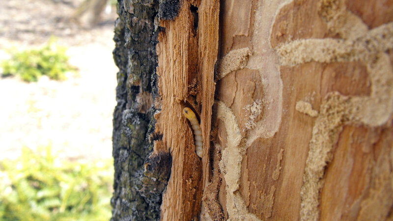 The Upside Of The Bitter Cold: It Kills Bugs That Kill Trees