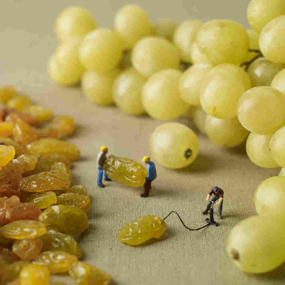 How raisins become grapes.