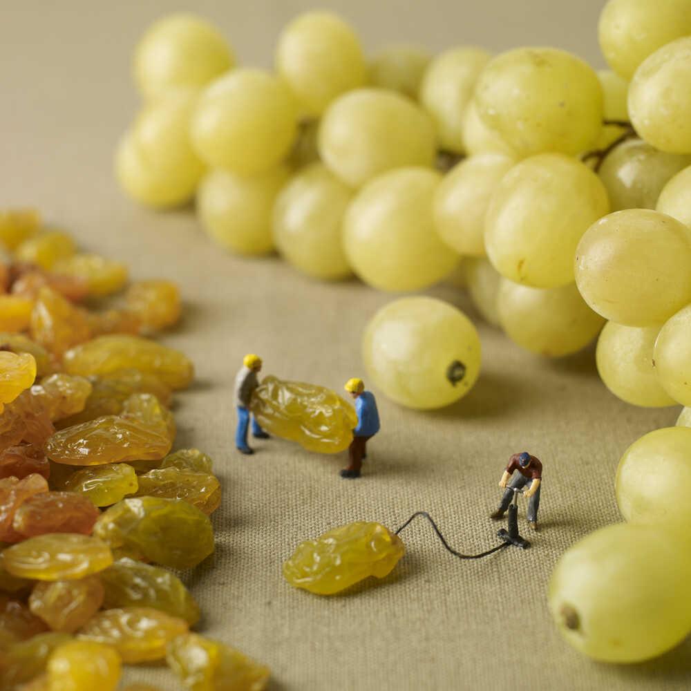How raisins become grapes.