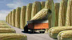 After Grist's six-month-long series on genetically modified foods, some loyal readers accused the site of changing directions in the debate.
