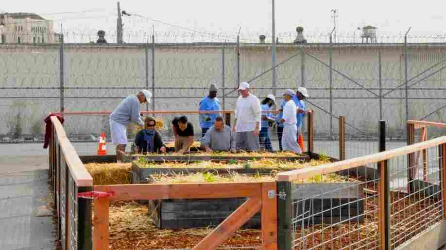 Prisoners build an organic vegetable garden in the prison yard of the medium security unit at S