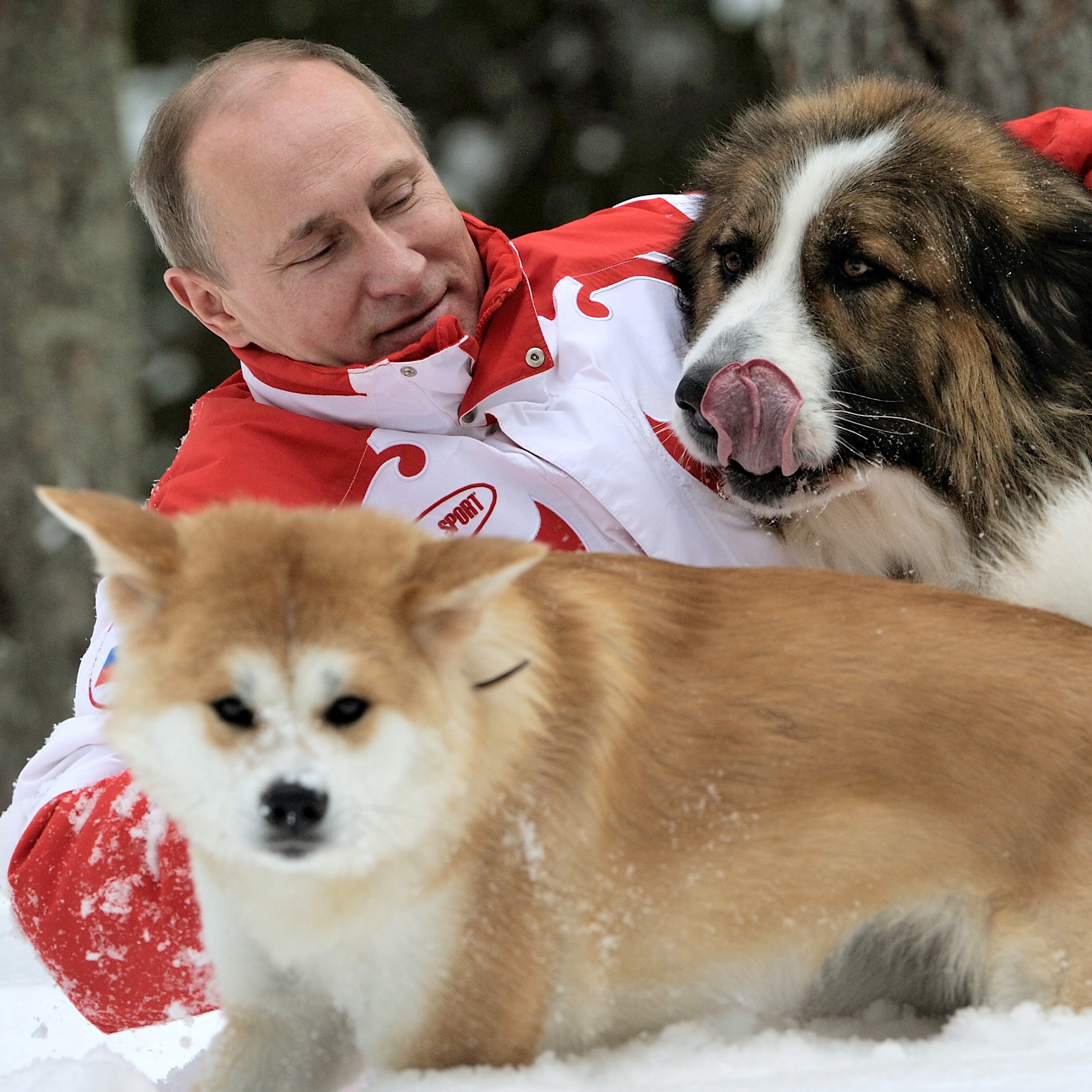 Russian President Vladimir Putin plays with his dogs Buffy (right) and Yume at his residence Novo-Ogariovo, outside Moscow on March 24, 2013. Bulgarian shepherd dog Buffy was presented to Putin by his Bulgarian counterpart Boyko Borisov, while Japanese Prime Minister Yoshihiko Noda offered Putin the puppy Yume as a gift during the G20 in Mexico in June.